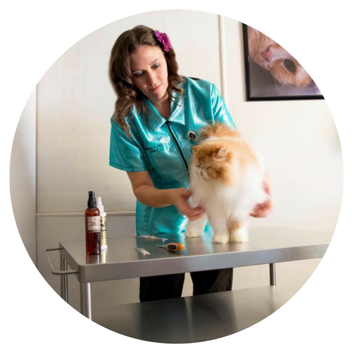 Meet Melissa Hall, CFMG and Owner of Touch of Class Pet Grooming