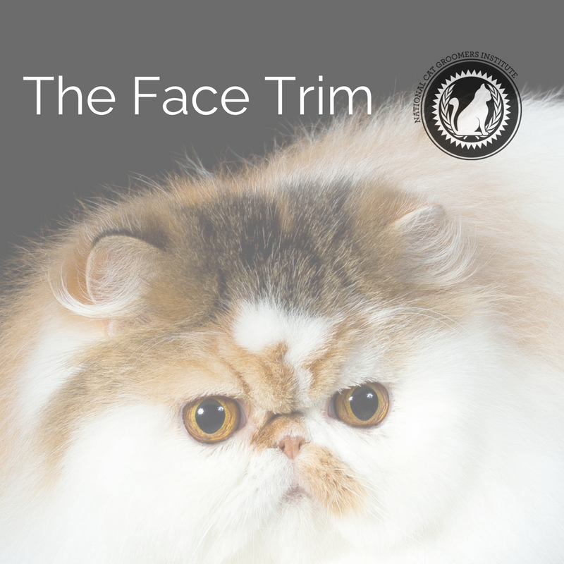 face trim online course