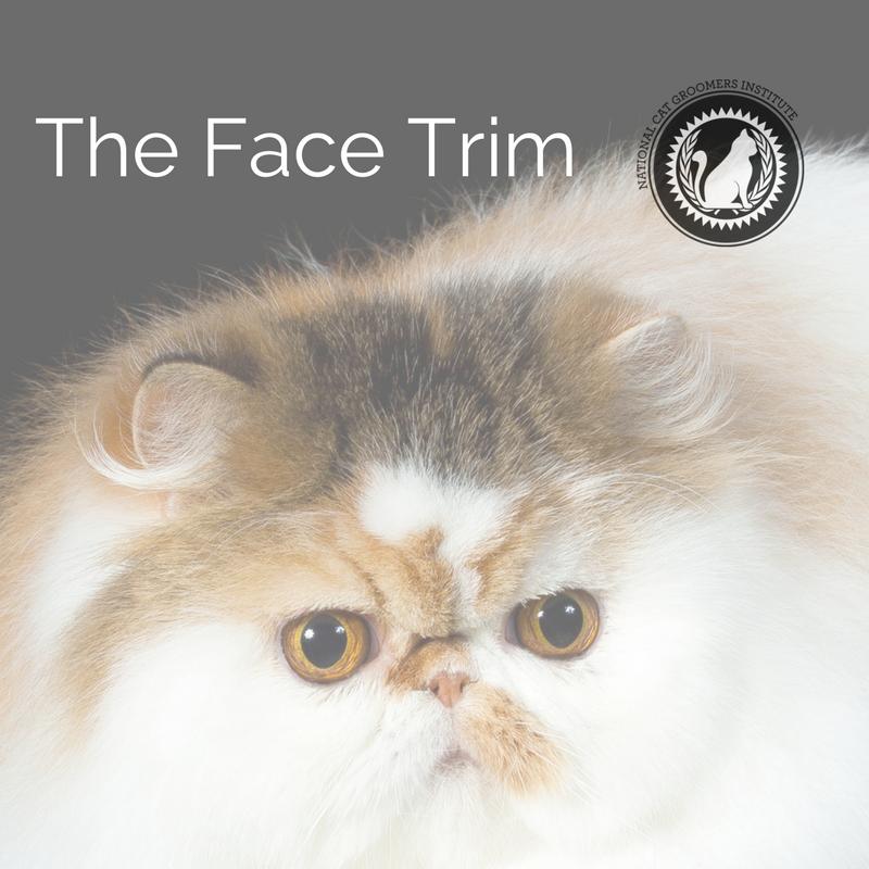 face trim online course