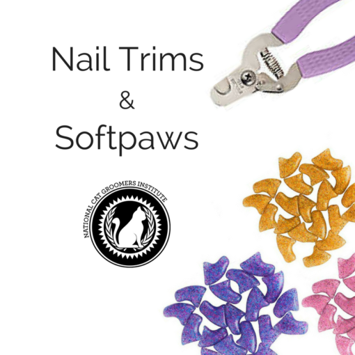 Nail Trims and Softpaws course