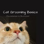 Cat Grooming Basics - Foundation to Success