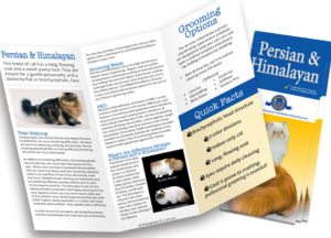 Persian & Himalayan Breed Care Customer Brochure