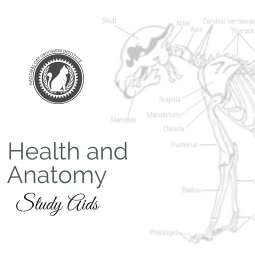 Health study aid course icon
