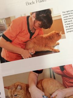 Cat Handling Techniques book excerpt