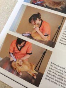 Cat Handling Techniques book excerpt 2