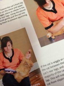 Cat Handling Techniques book excerpt 3
