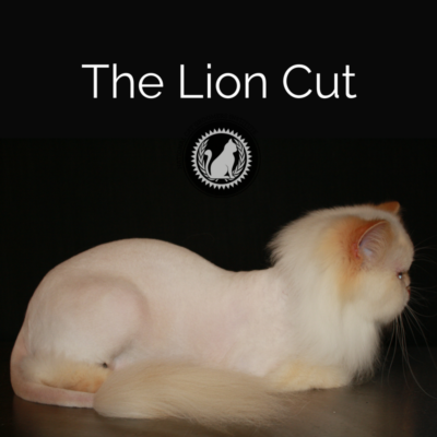 The Lion Cut online course