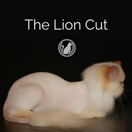 The Lion Cut online course