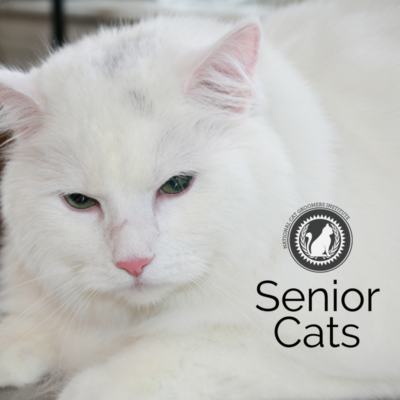 Senior Cats online course