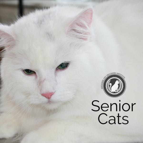 Senior Cats online course