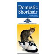Domestic Shorthair customer brochures