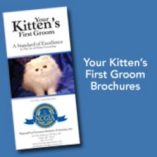 Kitten customer brochure