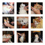 Cat bath stock images