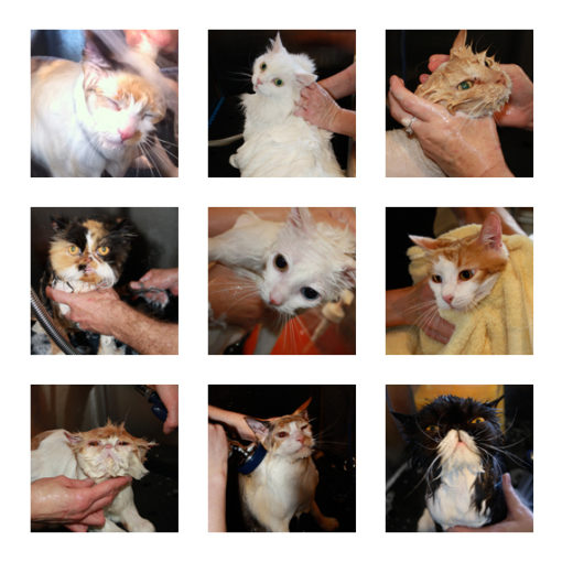 Cat bath stock images