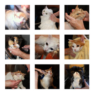 Cat bath photo package