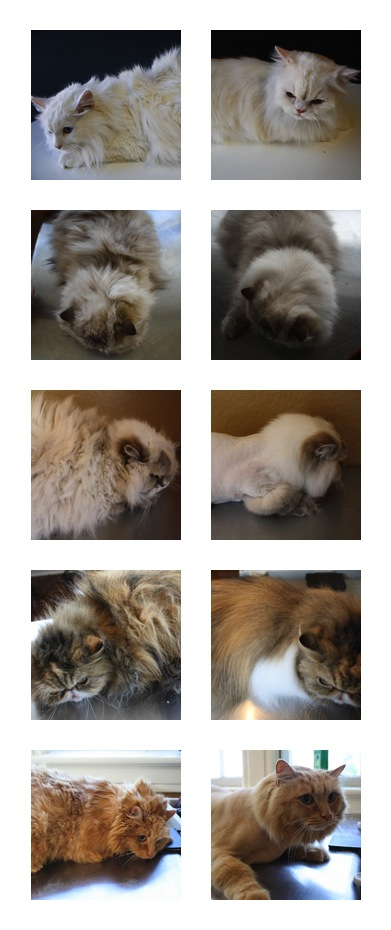 Before and after cat groom stock photos