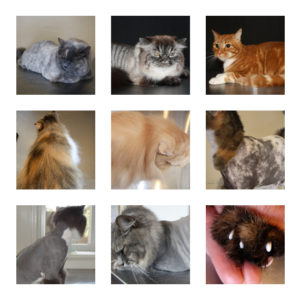 cat groom style photo package
