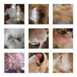 cat skin and coat issues stock photos