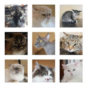 Posed cat photos