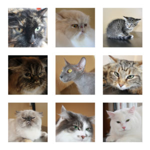 Posed cat groom photo package