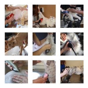 cat shaving stock photos