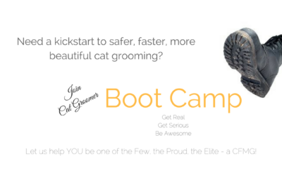 Is Cat Grooming Boot Camp Right for You?