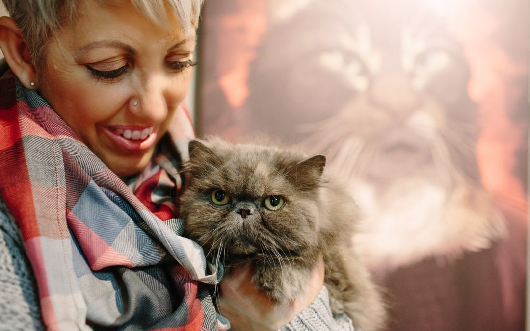 Secrets to Creating a Wildly Successful Cat Grooming Business