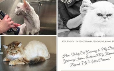 This Week's 5 Cat Grooming Resources