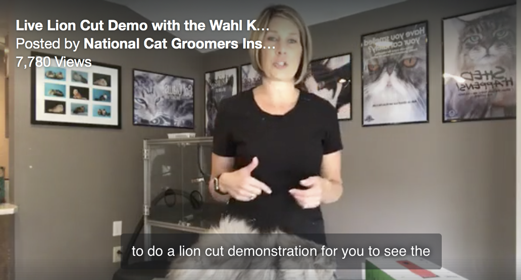 Lion cut demo using cordless Wahl KM10