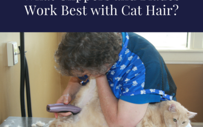 What Clippers and Blades Will Work the Best on Cat Hair?