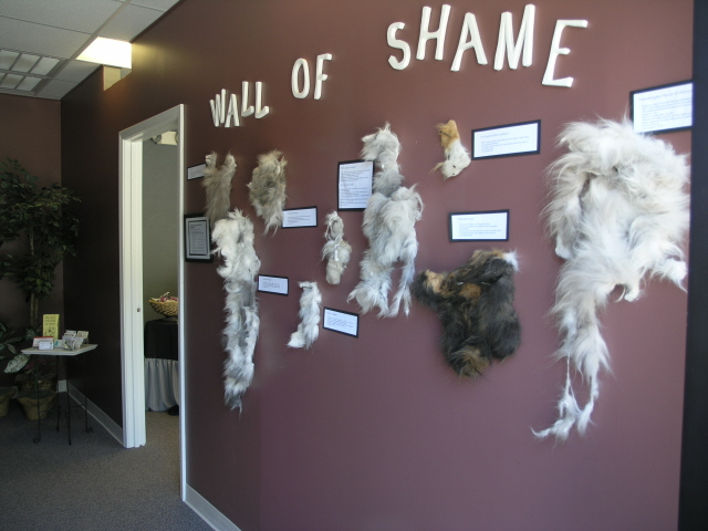 One Amazing Trick to Motivate Cat Clients Toward a 4-6 Week Grooming Schedule!