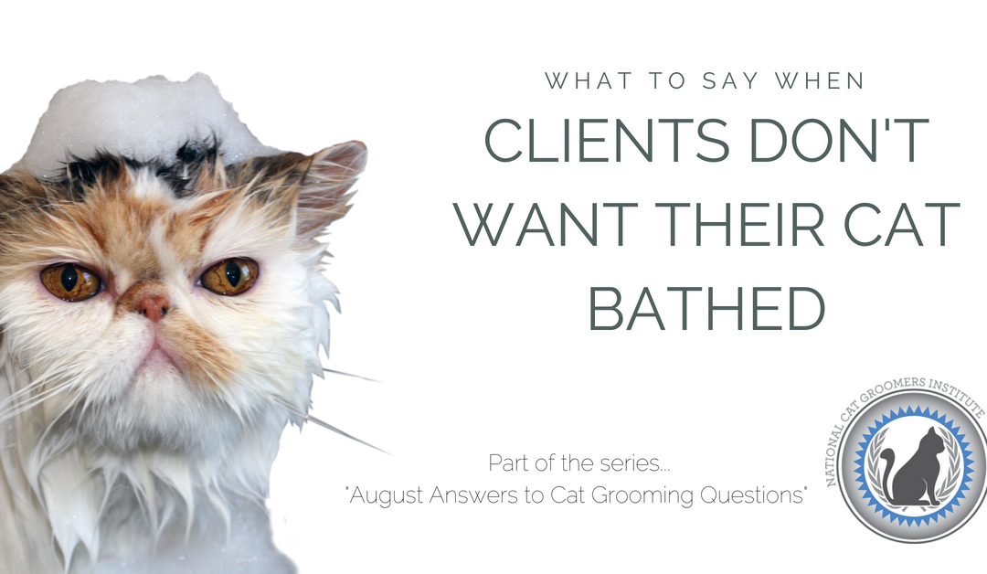 What to Say When Clients Don't Want Their Cat Bathed