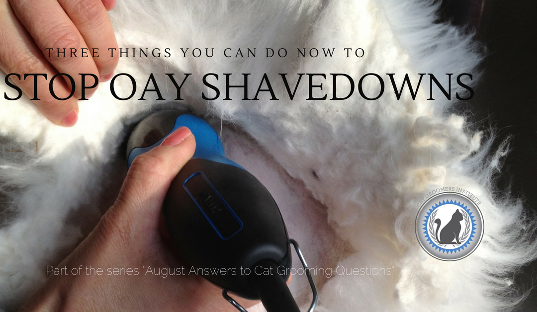 3 Things You Can Do Now to Stop Once-a-Year Cat Shavedowns