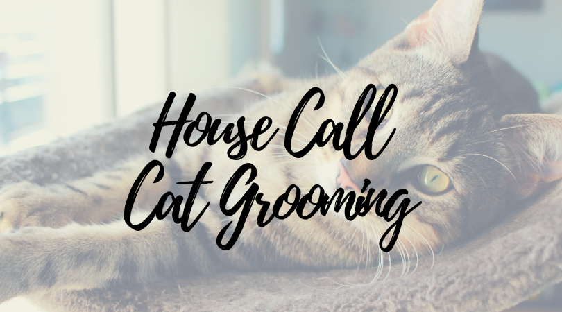 The Pros and Cons of House Call Cat Grooming