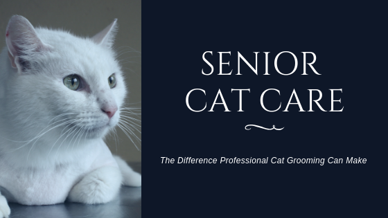 Senior Cat Care: The Difference Professional Grooming Can Make