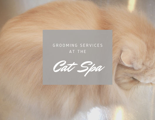 Grooming Services at a Cat Spa