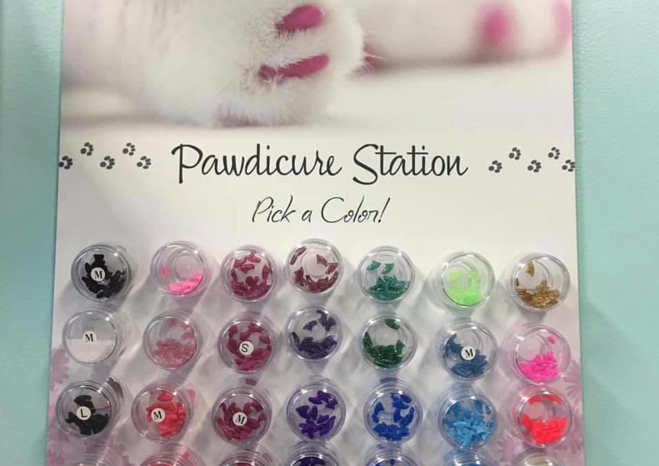 Displaying Nail Caps in Your Cat Grooming Salon