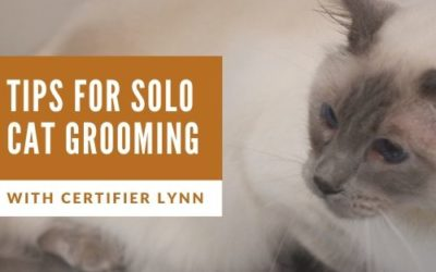 Tips for Grooming Cats Solo Live Class