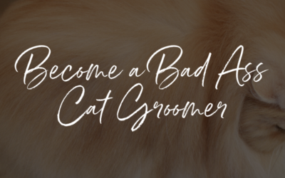How to Become a Bad Ass Cat Groomer