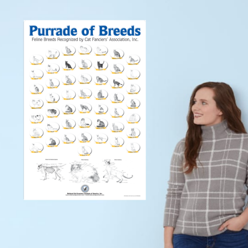 Woman leaning against wall looking at poster hanging on wall with cat breed drawings