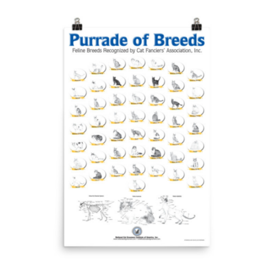 Displayed poster of cat breed sketches on blank wall
